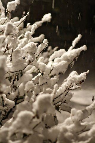 Bushes snow